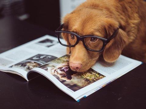 Собаки понимают человеческий язык — они умеют различать разные слова на слух