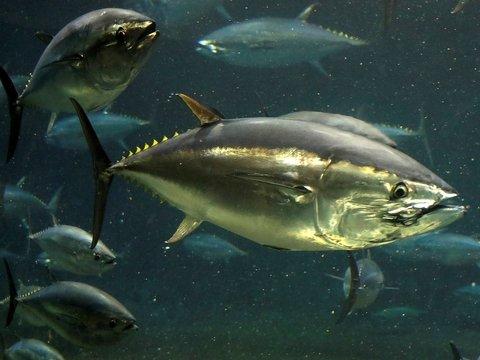 Рыбы в океанах задыхаются: из-за водорослей и потепления им не хватает кислорода