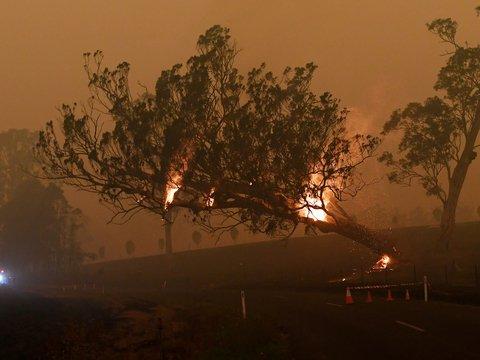 Дым от австралийских пожаров путешествует по миру. Но скоро он вернётся домой