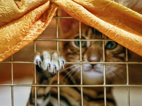 Аэрофлот vs. Котики: погубив 2-х котов, авиакомпания изменит перевозку животных