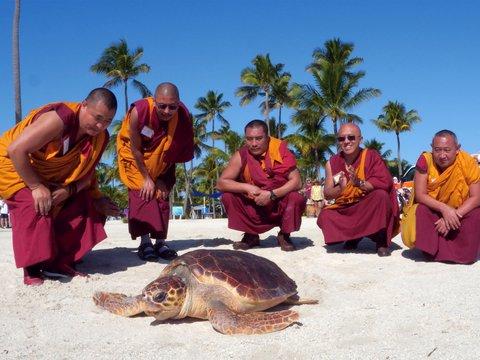 Плыви с богом: тибетские монахи благословили черепаху и выпустили её в океан