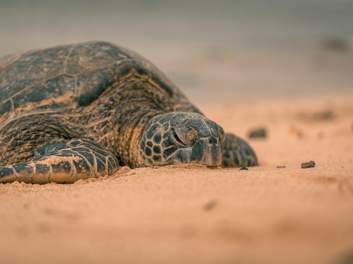 В Южной Америке нашли панцирь древней черепахи размером с машину
