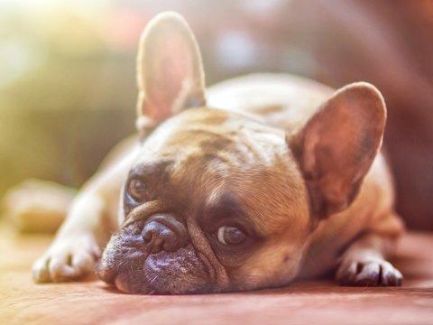 В Якутске предложили ввести налог на домашних животных. Где его уже платят?