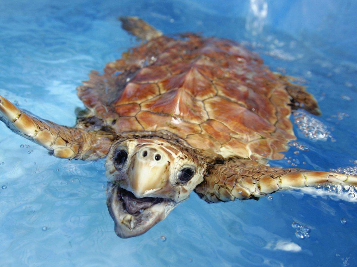 Почему морские животные глотают пластик? Он же несъедобный