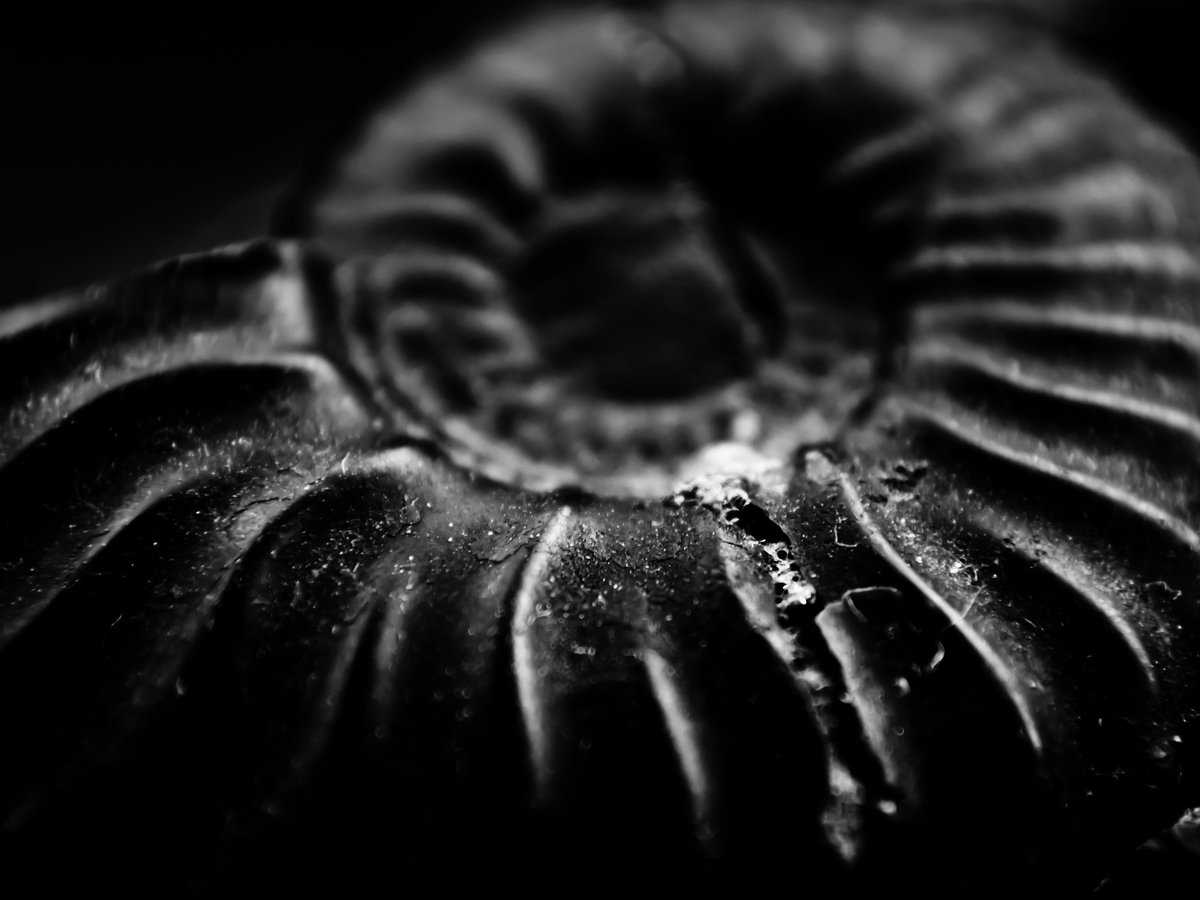 Ученые откопали древнюю личинку и назвали её родственником человека