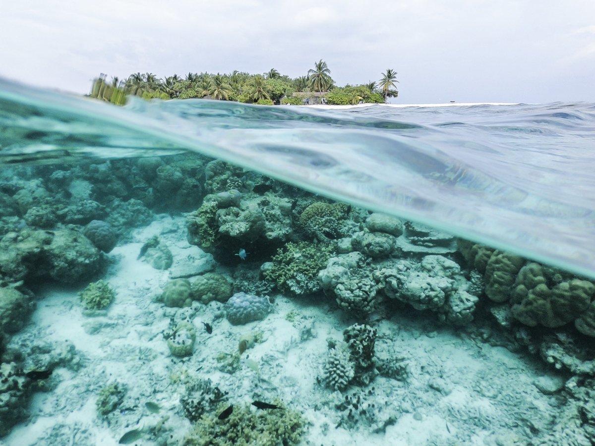 Большой барьерный риф стал ещё бледнее. Он обесцветился в третий раз за 5 лет