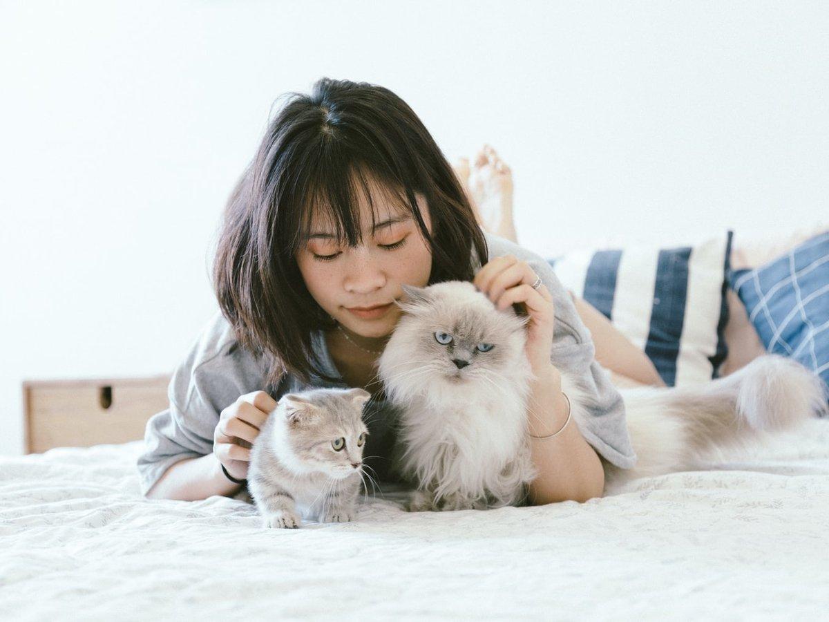Больше никакого гурманства: в Китае запретили есть кошек и собак