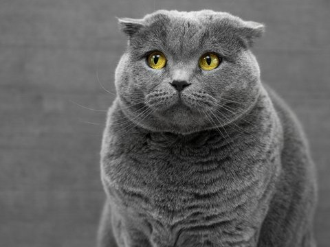 Храните кошек в недоступном для COVID-19 месте — они могут заразиться