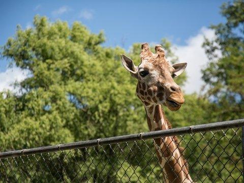 У зоопарков нет денег из-за карантина, и животных будут скармливать друг другу