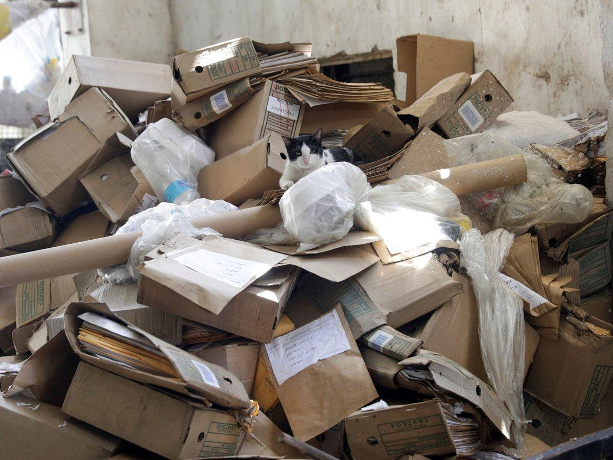 Что не так с мусором и вторсырьём во время пандемии COVID-19?