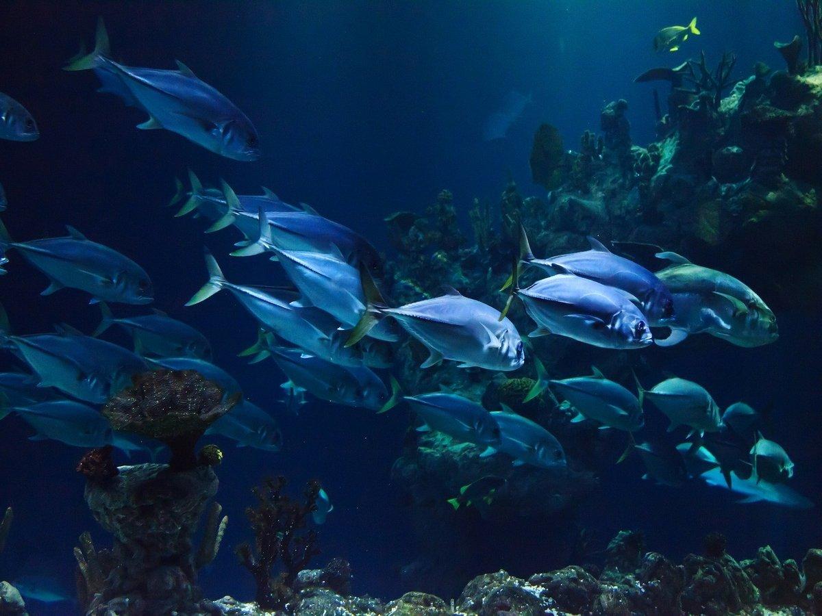 Рыбы в океанариумах грустят без людей и устраивают голодовки