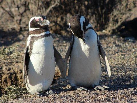 Скучающих на карантине пингвинов вывели в музей. Они оценили (фото, видео)