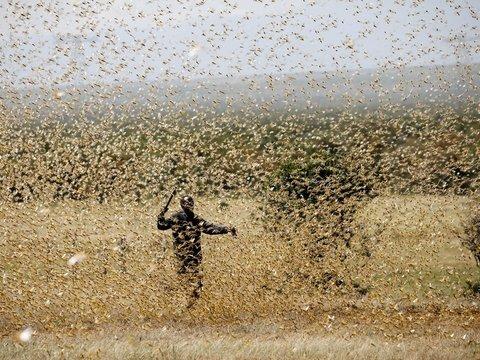 Восточной Африке не везёт: там бушуют 3 казни египетские