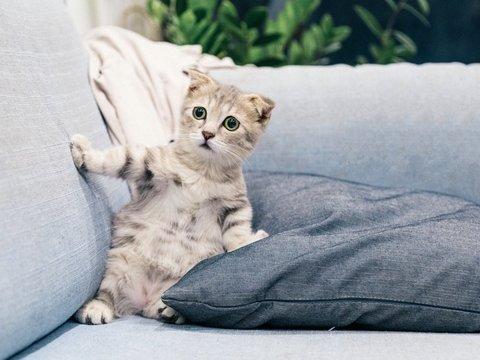 Котики могут стать гипоаллергенными. Достаточно накормить их новым кормом