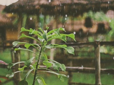 В Индонезии создают искусственный дождь, чтобы бороться с пожарами