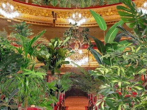 Без масок и соблюдения дистанции: в Барселоне дадут концерт для растений