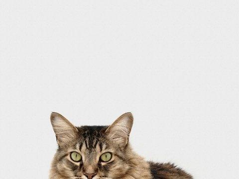 Японская полиция наградила кошку — без неё бы не получилось спасти человека