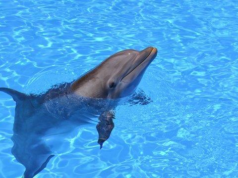 Китай купил робота-дельфина, чтобы не держать животных в неволе (фото, видео)