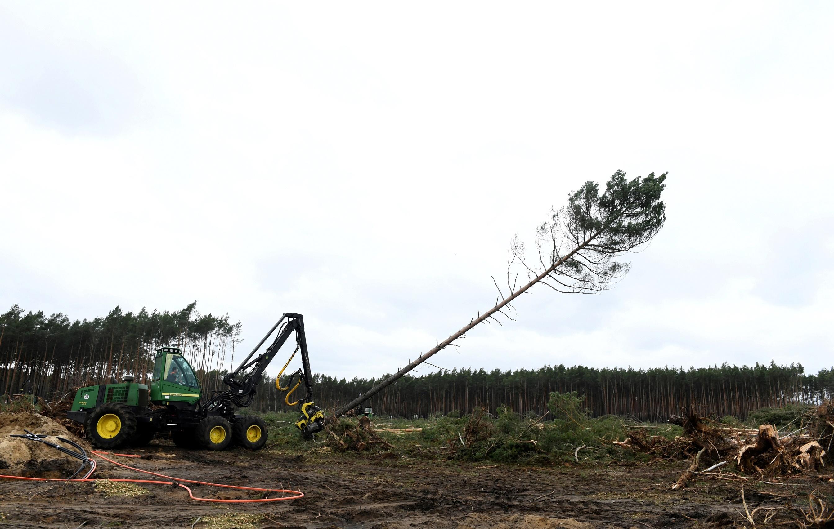 Для постройки гигафабрики пришлось вырубить лес