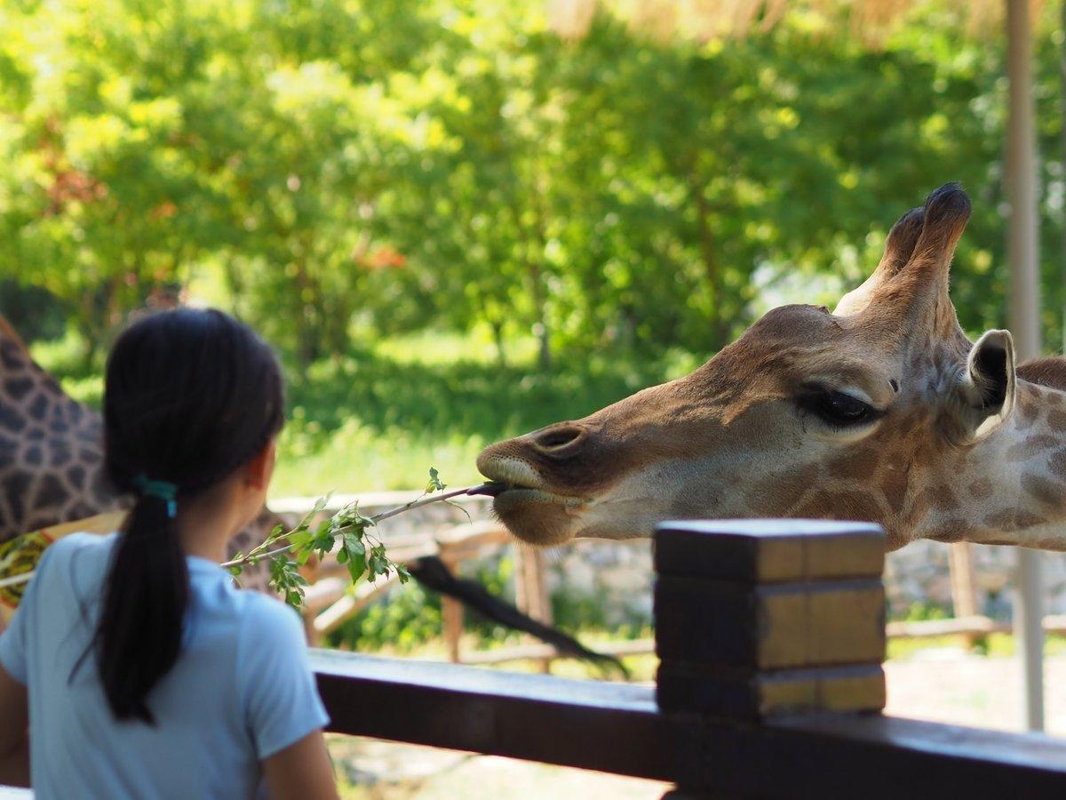 Хотите проснуться рядом с жирафом или тюленем? Вам в Бельгию