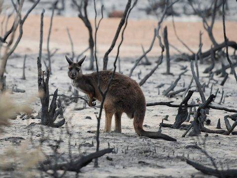 Не только коалы: от лесных пожаров в Австралии пострадало более 3 млрд животных