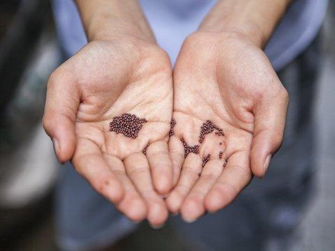 В США и Канаду приходят посылки с семенами из Китая. Их никто не заказывал