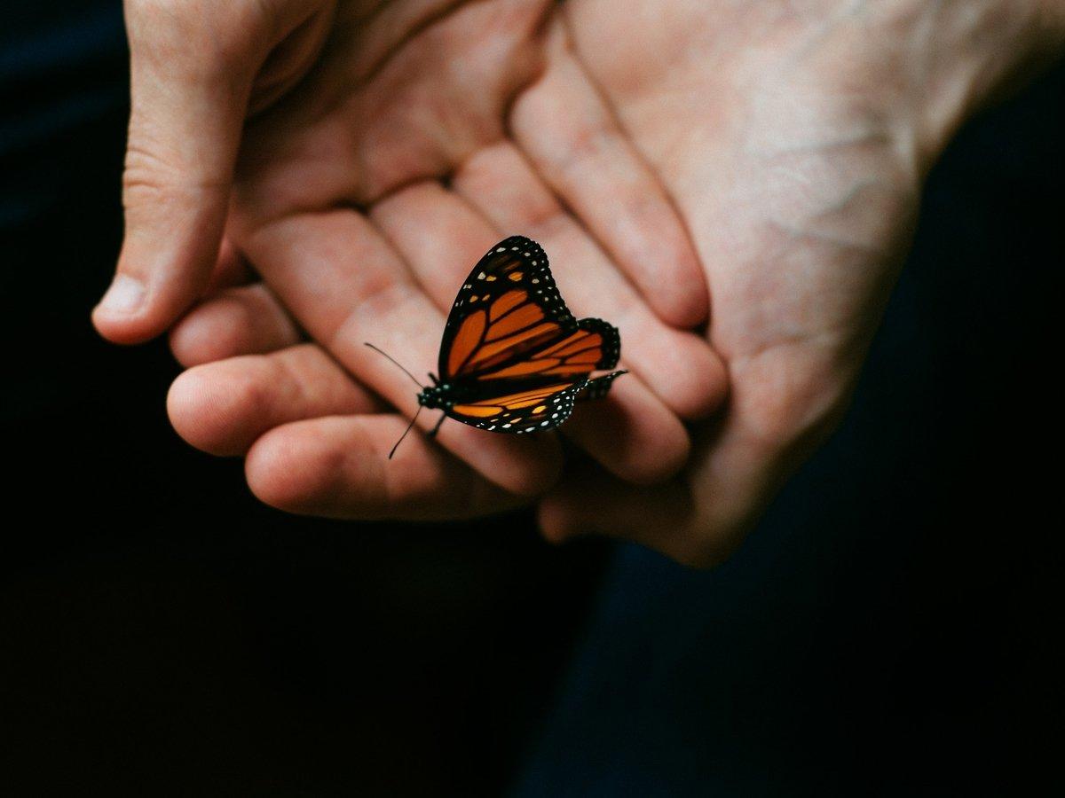 """Учёные смоделировали путешествие во времени: """"эффекта бабочки"""" не существует"""