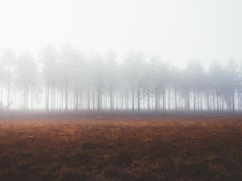 Цивилизацию погубят не войны и даже не коронавирус. Крах вызовет вырубка лесов