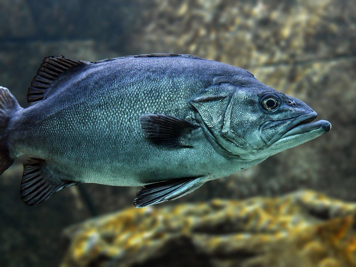 Биолог случайно отсканировал паразита из фильмов ужасов у рыбы во рту (фото)