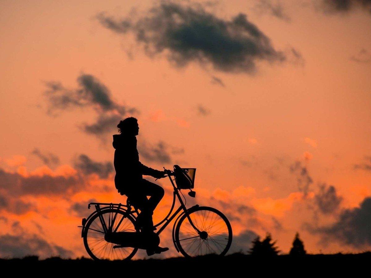 Всё ради мечты: японец украл велосипед и ехал до Токио 1000 км