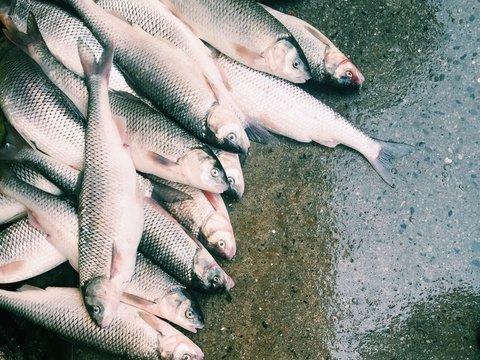 Во Франции в реке нашли тонны мёртвой рыбы. Говорят, виноват завод Nestlé