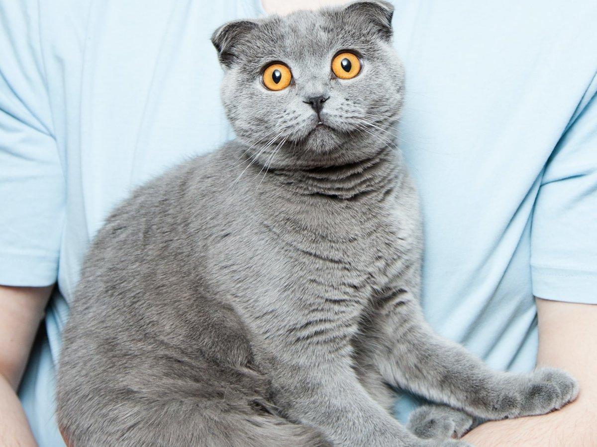 Любите котиков? Тогда вам в Японию: там питомцев арендуют вместе с номером отеля