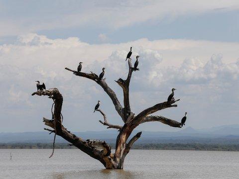 Разлив кенийских озёр может закончиться экологической катастрофой (фото)