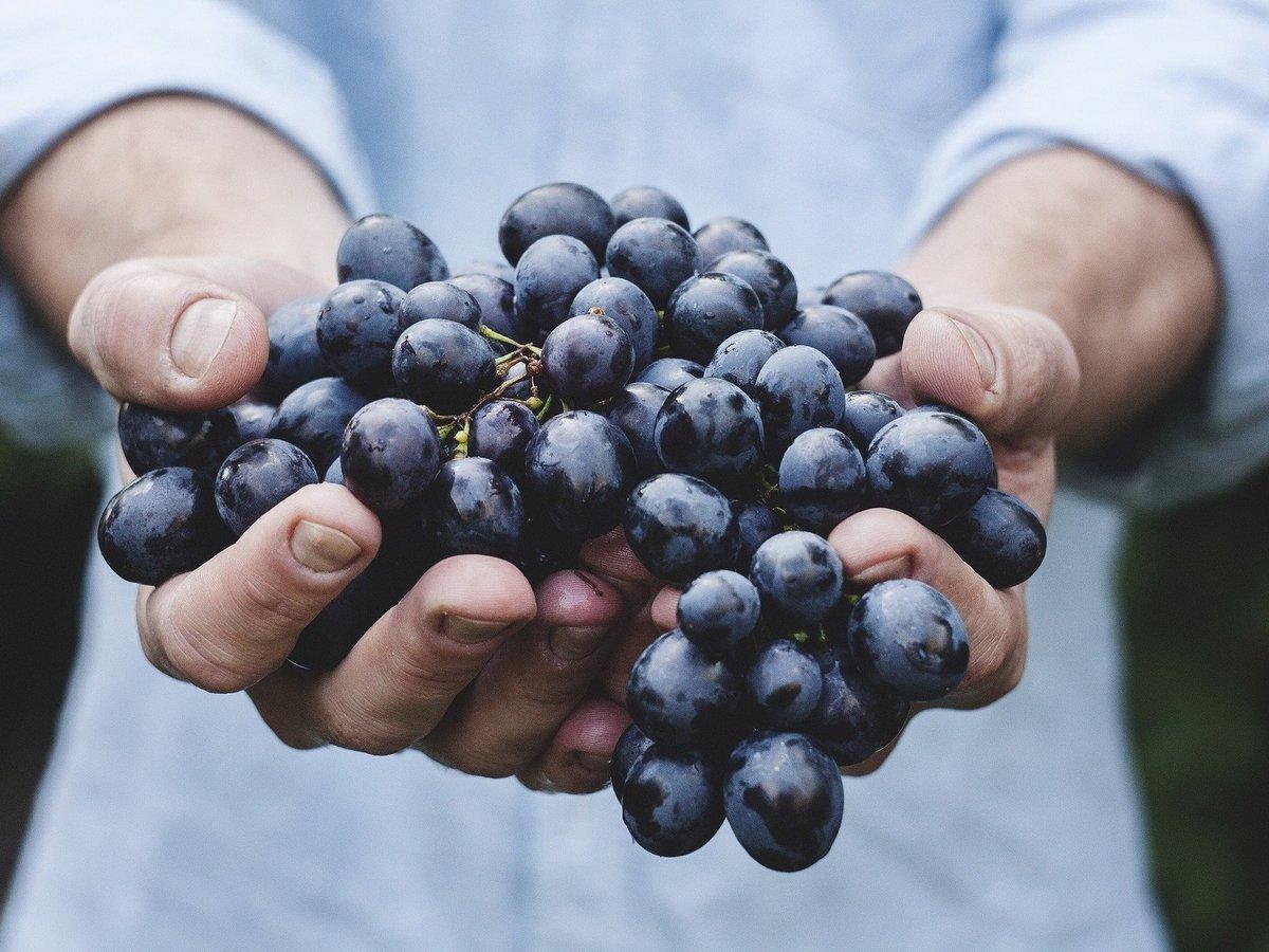 Вина не будет? Пожары в США испортили урожай винограда