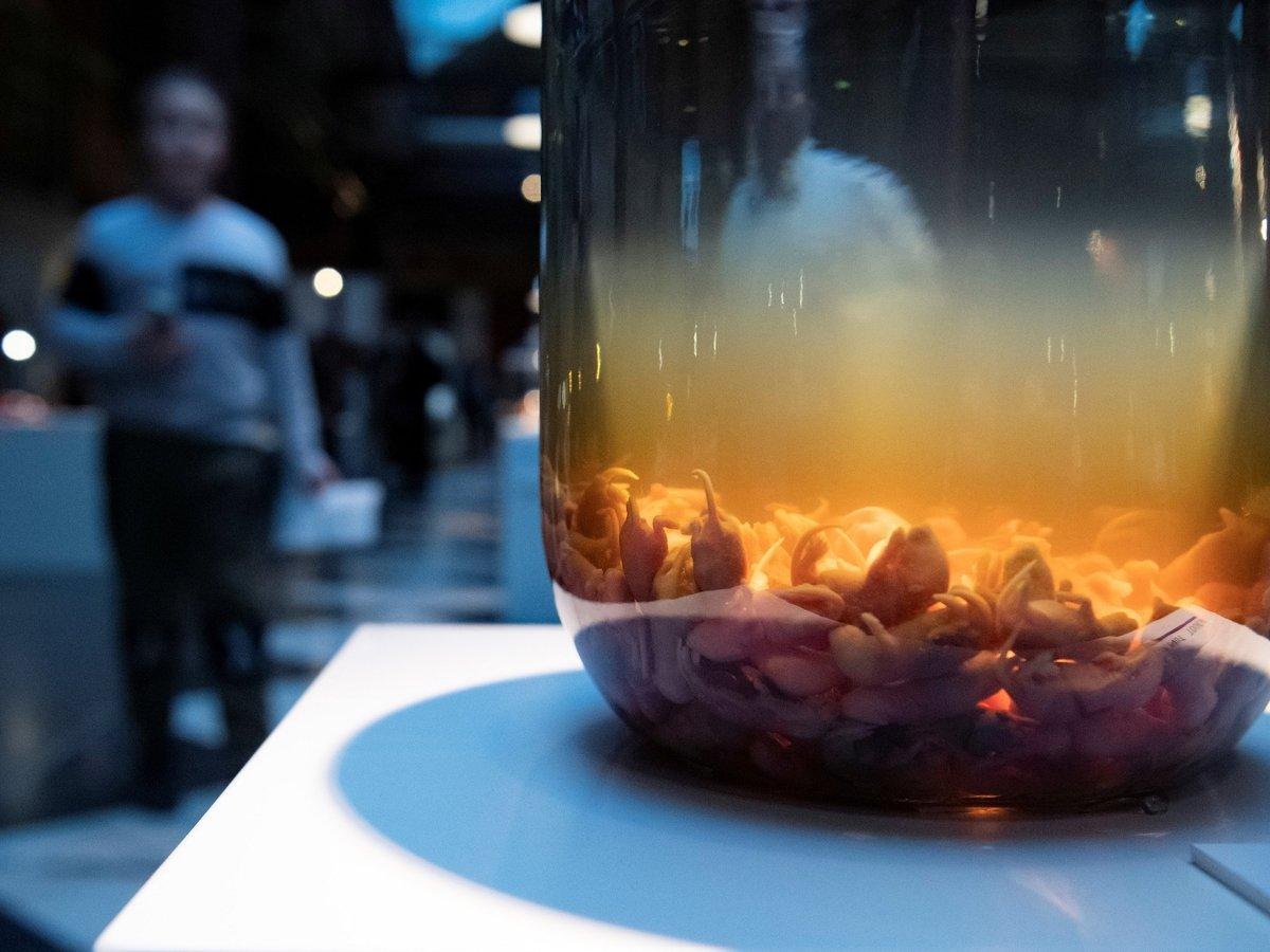 Музей мерзкой еды дополнил экспозицию пивом из китовых яичек и муравьёв (фото)