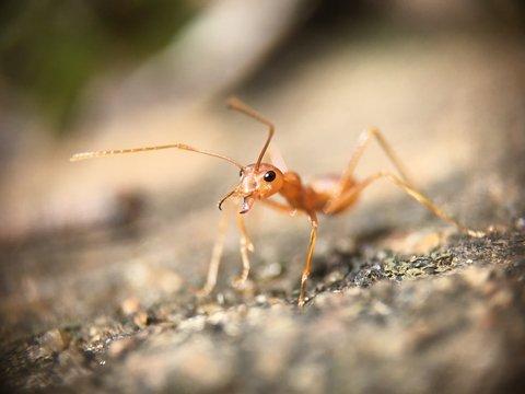 2020 не останавливается: Австралии грозят жёлтые сумасшедшие муравьи
