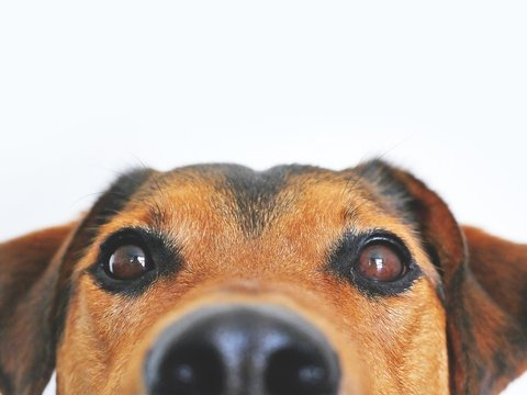 Собаки – наши старые друзья. Но люди всё еще не знают, как и где их одомашнили