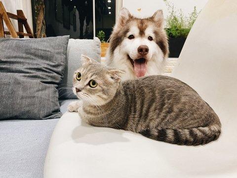 """Вредность кошек и доброту собак доказали: техника помогла животным """"заговорить"""""""