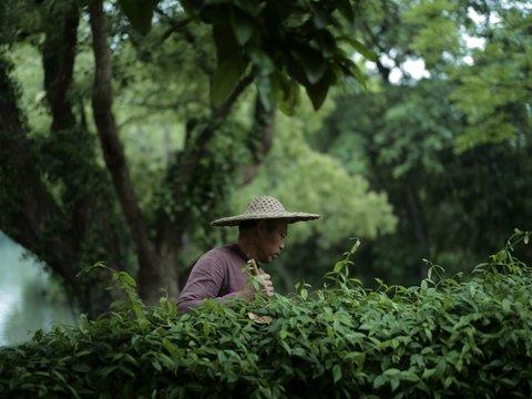 Лекарственные растения китайской медицины научились прятаться от людей