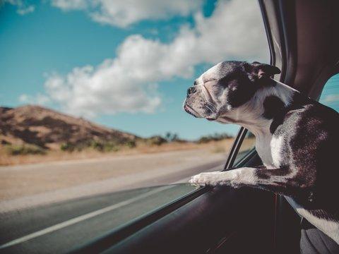 Собаки не узнают себя в зеркале, но отличают своё тело от окружающих предметов