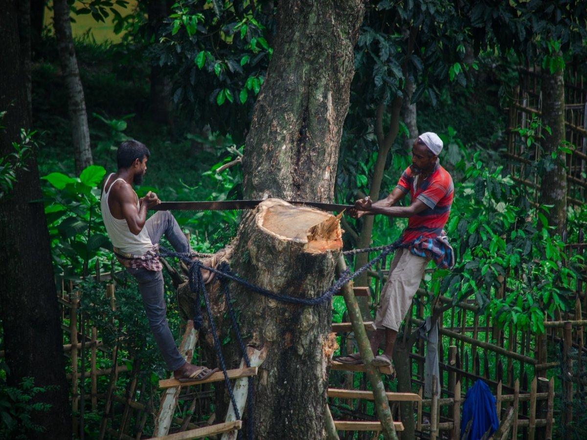 В 2020 люди уничтожили площадь тропических лесов размером с Нидерланды