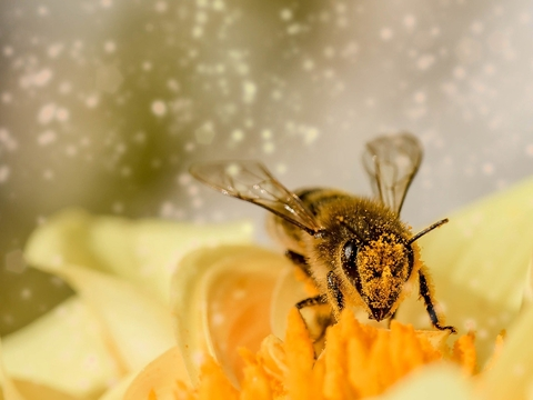 Пчёлы могут исчезнуть в 2035. Что тогда?