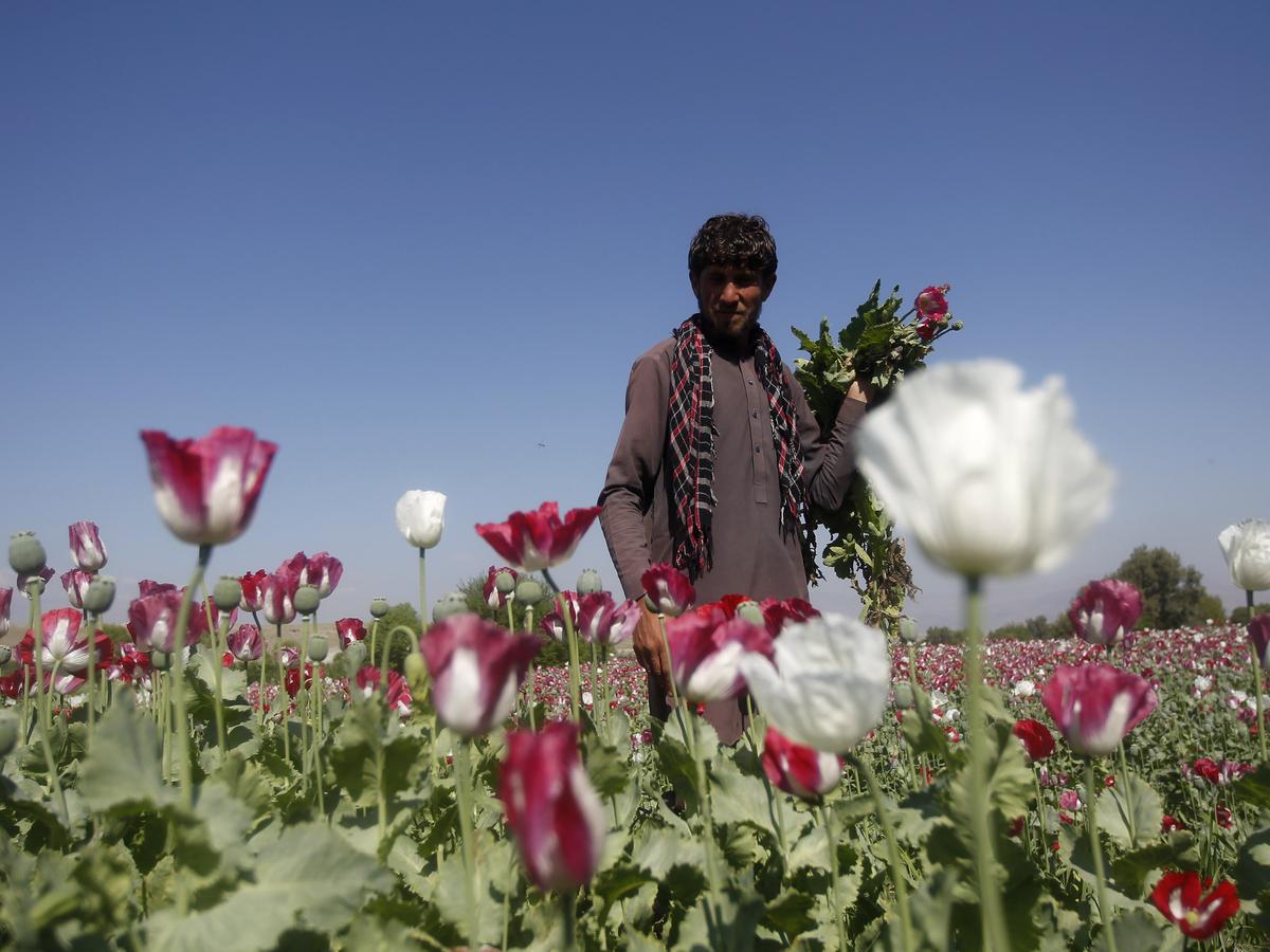 Опиумная война в Афганистане